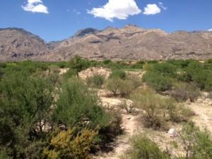 The Greens At Ventana Canyon